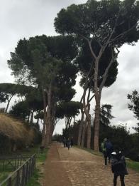 need Rooma puud...