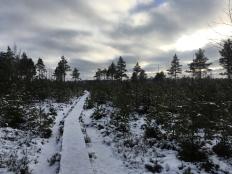 Kui Eestimaa rabades uitan